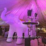 белый слон, слон на прокат